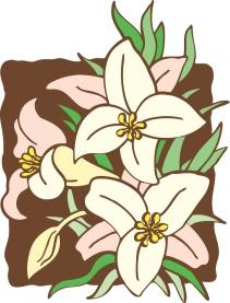 lilies_5615c