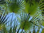palms_1826c